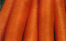 Нантская 4 морковь