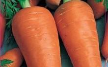морковь Рекс