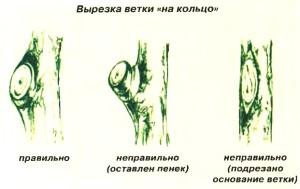Вырезка ветки на кольцо
