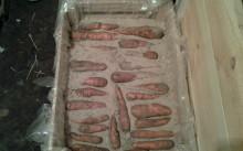 В песке - хранение моркови