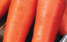 Консервная морковь