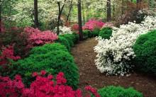 Кустарники цветущие вдоль дорожки