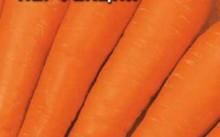 Перфекция морковь