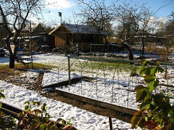 Посев под зиму