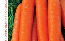 Анастасия F1 морковь