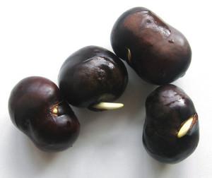 Пророщенные орехи каштана